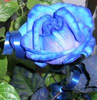 Blue Rose by ttz