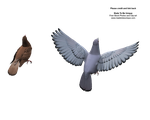 3d dove model flying pose by madetobeunique
