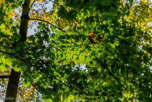 Fall Wiesbaden Kurpark 07 by tnhop