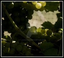 Jackson Riesling I by tjackson80