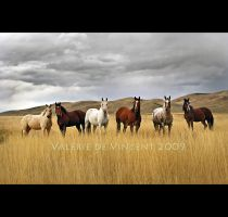 Six Horses by zasu