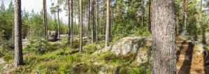 Forest Finland by evreska