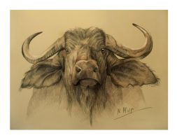 buffalo head by Natamur