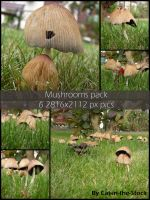 Teh Shroom Pack by Cat-in-the-Stock