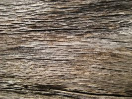 Wood Texture I by blacklacefigure