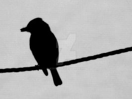 Bird on a Rope by adhpv