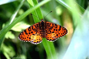 Butterfly project III by PaulVonGore