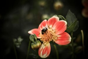 Nature Life -  Bee by Maci1702