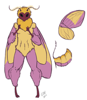 Rosy Maple Moth by crazyredwolf
