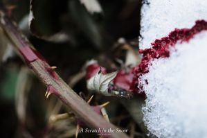 A Scratch in the Snow by Twinelens