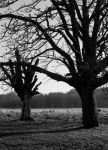 Richmond Park Deer by bladz56