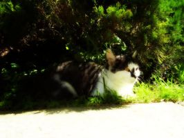 In The Shade by Zrinka