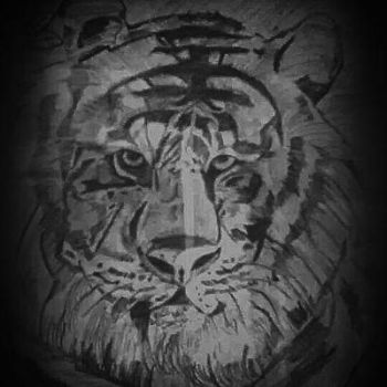 the tiger by manish5695