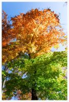 colors of autumn by PhotographyChris