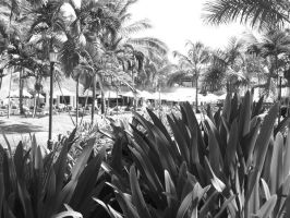 Paradise In Black And White. by jmclea01