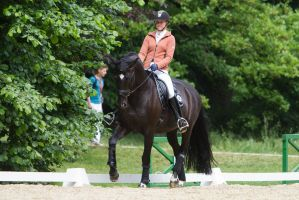 Black Warmblood Dressage Training Collected Trot by LuDa-Stock