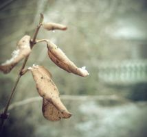 Dead leaves by Pamba
