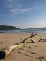 Driftwood by Married2Anna98