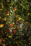 Willow Island Autumn by EarthHart