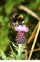 Thistle Visitor by In-the-picture