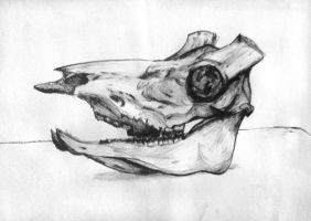 Still Life with Cow Skull by akrawczyk83