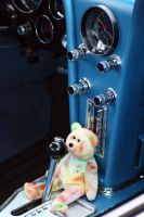 Bear in dash.... by xgphoto