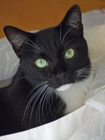 Felix in a plastic bag by NB-Photo