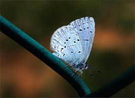 One More Little Blue by andras120