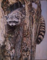 Rocky Racoon by Earleywine