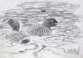 Loon sketch by dogman63