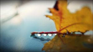 F a l l i n g Into Autumn Showers by GrotesqueDarling13