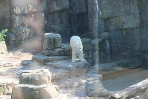 zoo Pic_24 by Mustang-Heart
