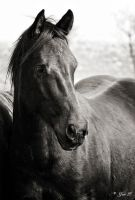 BLACK BEAUTY by Yair-Leibovich
