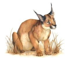 Caracal by Seaff