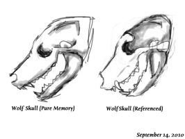 Wolf Skull Before and After by Yazora