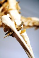 Lion Articulation Ginglymus and Radioulnar joints by Meddling-With-Nature