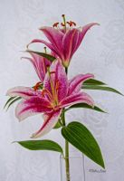 HDR Lilly by Deb-e-ann