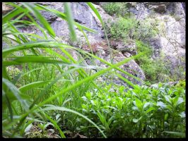 Greenery and Rocks by Infinitely