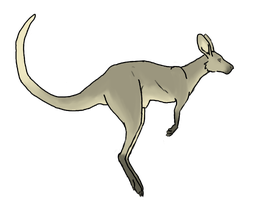 Coloredkangaroo by BREAD-the-PIRATE