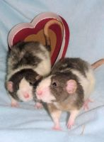 Happy Valentines Day from the twins by usedbooks