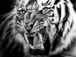 Tiger by CorinaO