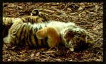 sleeping tiger 2 by miezbiez