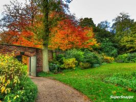 Into Autumn by supersnappz16