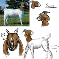 Simple Goat Study by FeatheredSoap