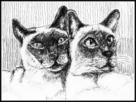 Siamese Friends by philippeL