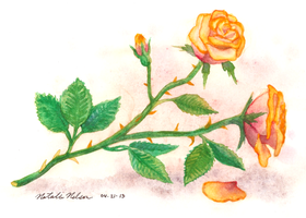 Roses For Abuelita by SailingBreezes