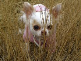 Cleo in the Grass by RF-Kennels