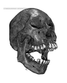 Skull study by stonedsour887