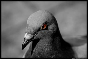 a portrait of a bird by qbsster