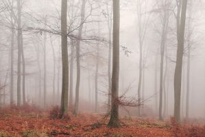 Haunted Woods I by Regadenzia